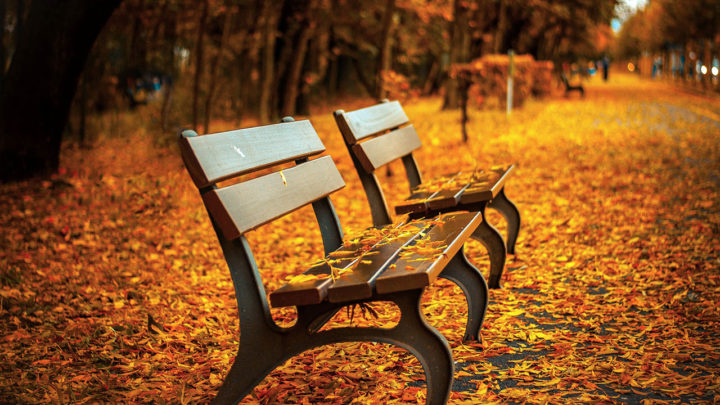 autumn-season-background