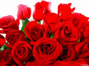 Red Roses Valentine Background for PowerPoint