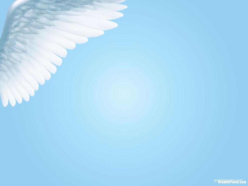 white bird background
