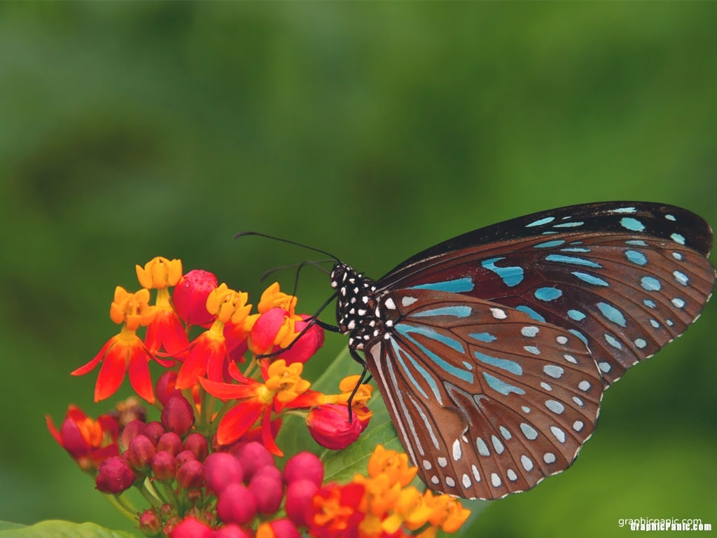 butterfly background for powerpoint