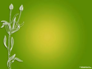 flower with fresh green background