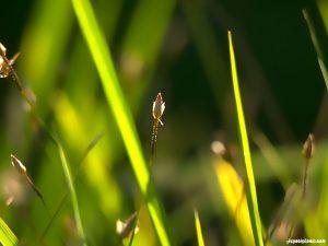 grass ppt background
