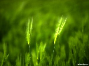 green grass powerpoint background