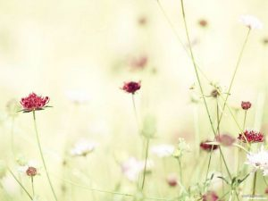 Minimalist Flower Background for Powerpoint